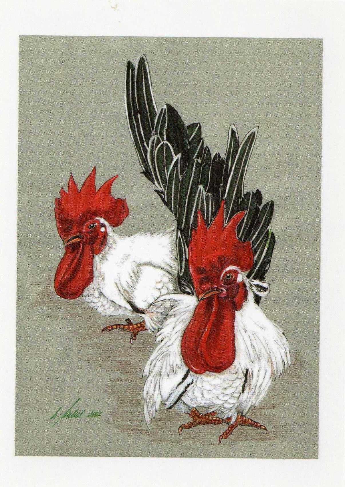 Von Hahnen und Hennen Literatur